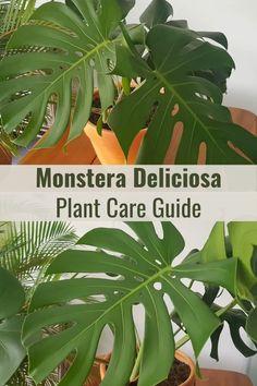 Aloe Vera Plant Indoor, Indoor Plants, Banana Plant Indoor, Hanging Plants, Monstera Deliciosa, Gardening For Beginners, Gardening Tips, Bonsai Tree Care, Recycled Garden