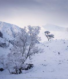 Winter Glen, Moffat & Dumfries, Scotland