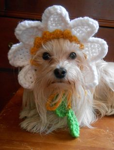 Crocheted Daisy Hat for Cat or Dog, Yellow Flower Hat for Pet, Spring Flower Pet Hat - Gelb Crochet Costumes, Diy Dog Costumes, Pet Fresh, Dog Jumpers, Crochet Daisy, Paws And Claws, Cloth Flowers, Puppy Clothes, Flower Hats