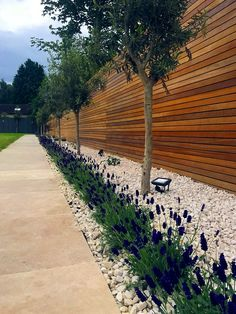 Hardwood slatted horizontal privacy screen trellis fence with lavender olives roses and cream traver Back Garden Design, Backyard Garden Design, Fence Design, Patio Garden Ideas Uk, Small Back Garden Ideas, Small Backyard Landscaping, Backyard Fences, Fenced Garden, Front Garden Ideas Driveway