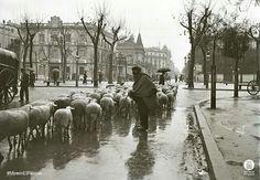 Passeig de Gracia - Diputació, 1920, foto de Frederic Juandó Alegret