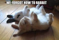 Funny Rabbit Pictures (4)