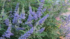 5 Ways Vitex Can Help Your Hormones // Aviva Romm, M.D.