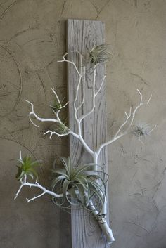 Coral Branch Air Plant Holder mounted on by BarnwoodBlooms on Etsy