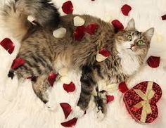 We cat lovers arent We cat lovers arent surprised when we hear that up to 90 percent of pet owners include their pets in holiday celebrationsespecially Valentines Day. Valentines Day Cat, Valentines Presents, Funny Valentine, Kittens Cutest, Cats And Kittens, Kitten Love, Pet Safe, Pretty Cats, Pretty Kitty