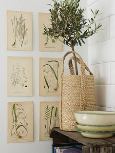 Mediterranean style is easily achieved with an olive tree and botanical prints Ballard Designs, Indoor Olive Tree, Olivier En Pot, Impressions Botaniques, Vibeke Design, Ideas Prácticas, Sweet Home, Easy Home Decor, My New Room