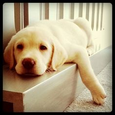 :) Reminds of my Tritan Bear when he was a puppy