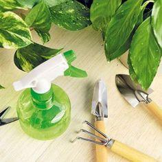 Chránime izbovú zeleň - najčastejšie choroby a škodce