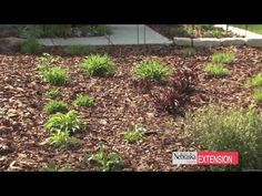 Basics of Making a Rain Garden Here is a video about the basics of making a rain garden.  The purpose of rain gardens is to capture the rainwater runoff and put it back into the ground before it has a chance to enter the city system, where by carrying urban waste, it can damage local lakes and streams. Creating a rain garden can simultaneously help alleviate the problems of urban runoff while giving your landscape an attractive makeover.