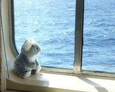 Who's that Koala bear in the window? This Koala bear was a gift from Holland America Line during our Asia-Australia-Pacific cruise aboard the HAL flagship, ms Amsterdam. Our bear is keeping a tight watch from our cabin as we cruise the Pacific Ocean.