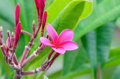 Kicking off #AlohaMonday with some fresh plumeria #flowers. #Hawaii #gohawaii #travel