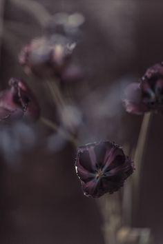 Home - Rachel Dubbe Fotografie