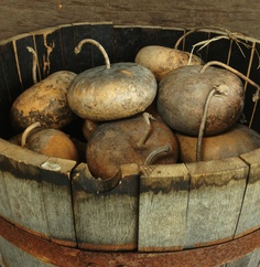 Beautiful bucket of dried gourds....love....