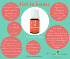 Ravintsara essential oil is for people who like to breathe. It pairs well with Eucalyptus essential oil in the diffuser. It can also be applied to the chest with coconut oil. Coconut Oil For Teeth, Coconut Oil For Dogs, Coconut Oil Pulling, Coconut Oil Uses, Essential Oil Diffuser Blends, Doterra Essential Oils, Yl Oils, Young Living Oils, Young Living Essential Oils