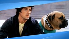 An Inspiring Story About Sylvester Stallone and Stallone's Emotional Tribute to His Dog Butkus! (2 Videos)  The iconic actor Sylvester Stallone, best known for his role in Rocky, just shared the most beautiful tribute to his dog Butkus.