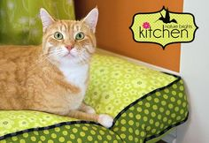 Pet Bed Tutorial with Zipper and Piping