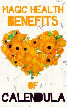 Magic Health Benefits of Calendula