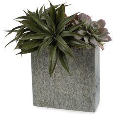 Faux Green Succulent Plants in Natural Grey Slate Rectangular Vase (2.150 HRK) ❤ liked on Polyvore featuring home, home decor, floral decor, plants, deco, fillers, modern home decor, grey home decor, artificial arrangement and gray home decor