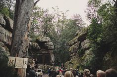 The Bush Cathedral at Kangaroo Valley. what a magical wedding location! Magical Wedding, Dream Wedding, Chic Wedding, Wedding Shoes, Wedding Details, Wedding Decor, Bush Wedding, Wedding Bells, Australian Garden Design