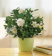 Cele Mai Bune 79 Imagini Din Flori Si Plante De Apartament