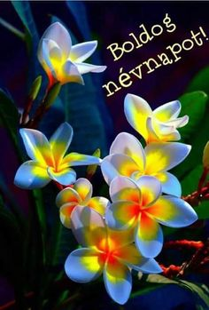 Photo about Group of beautiful frangipani flowers background. Image of frangipan… Photo about Group of beautiful frangipani flowers background. Image of frangipani, glowing – [. Unusual Flowers, Amazing Flowers, My Flower, Pretty Flowers, Flower Power, Beautiful Flowers Garden, Cactus Flower, Tropical Flowers, Colorful Flowers