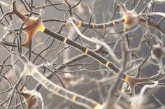 本物同様に機能する人工ニューロンが開発される(スウェーデン研究)
