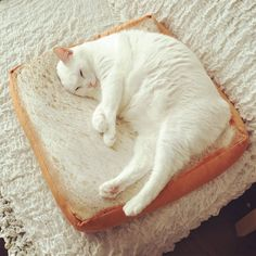 S-Lifeeling Pet Bed Soft Quilted Cat Cushion Mat Simulated Creative Toast Cat Bed for Cute Animal Catty and Doggy Sleeping Playing Resting - I Heart My Cats Cat Cushion, Cushion Pillow, Cat Pillow, Pillow Mat, Plush Pillow, Throw Pillow, Cover Pillow, Cat Dog, Pet Puppy
