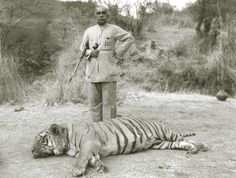 Maharajah of Bikaneer, Sir Ganga Singh with his 200th tiger.