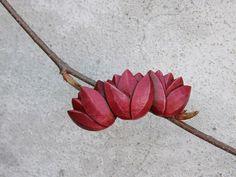 třitulipánky červené , malé .. (kovová sponka 7cm) Plants, Plant, Planets