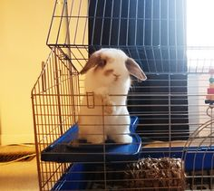 Bunbun's Telescoping Thursday! He jumped on the platform to map treat location. http://ift.tt/26ylTJ6