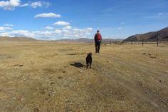 De hond heeft zijn oorsprong mogelijk in Mongolië of Nepal. Dat schrijft de Volkskrant. Daar moeten prehistorische jagers zo'n 15 duizend jaar geleden een grijze wolf tot huisdier hebben gen…