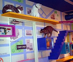 Love the cat stairs with catwalks, simple background would be good too:) #catwalks #CatStairs