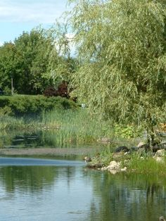 Arboretum en été Nature, River, Outdoor, Landscapes, Outdoors, Outdoor Games, Outdoor Living, The Great Outdoors, Rivers