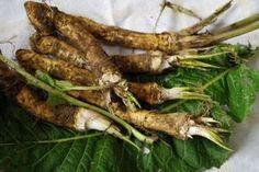 Jak využít křen v boji s nachlazením