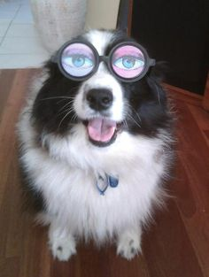 dog pics funny | Funny Dogs Wearing Glasses