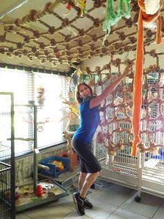 DIY pet bird room ideas you'll have fun making for your pet parrot, cockatiel, cocatoo, mackaw or other large bird. Heck even parakeets would love a bird playground like this! Busy birds are happy birds! Cockatiel, Budgies, Parrots, Diy Bird Cage, Diy Bird Toys, Diy Parrot Toys, Parrot Perch, Bird House Kits, Bird Aviary