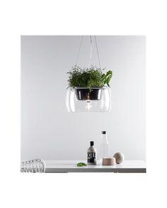 Plant Pendant - Clear - Markslöjd
