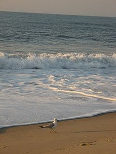 Ocean City Md, my paradise!