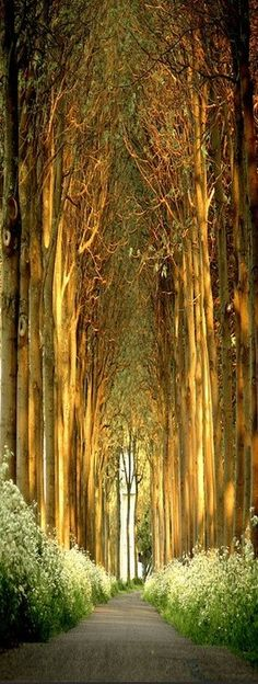 Church of Trees in Belgium Now this is my kind of church! Tree Tunnel in The Netherlands. This natural tree tunnel is in Dalfsen, Overijssel (NL). The Places Youll Go, Places To See, Beautiful World, Beautiful Places, Amazing Places, Amazing Photos, Beautiful Forest, House Beautiful, Amazing Things