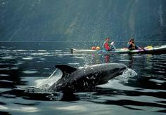 in my dreams, I kayak around Barkley Sound, with no thought given to anything more then enjoying the present moment