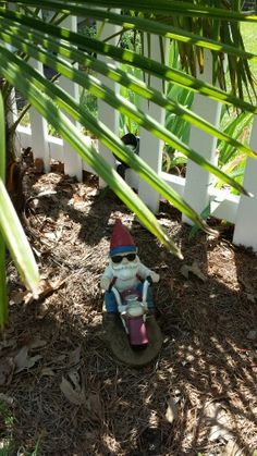Motorcycle Gnome Under the Windmill Palms