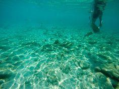 Um dos melhores programas nas praias de Curaçao é mergulhar. Quem quer dar nadar nesse mar? --------- One of the best programs on the beaches of Curacao is diving. Who wants to swim in this sea? --------- #curaçao #caribe #carribean #beach #praia #sea #igtravel #instatravel #photooftheday #picoftheday #traveladdict #travelblog #travelgram #trip #viagem #wanderlust #instanature #natureza #soulnature_ #vibe_life_nature #blogdeviagem #letsflyawaybr #aquelasuaviagem #essemundoenosso…