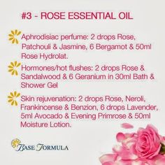 Rose Otto essential oil is particularly beneficial for skincare, emotional problems & the female reproductive system. Rose Essential Oil, Essential Oil Perfume, Perfume Oils, Essential Oil Blends, Rose Perfume, Aromatherapy Recipes, Aromatherapy Oils, Homemade Perfume, Perfume Recipes