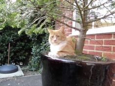 148 Cat-Plants You Probably Shouldn't Water My Flower, Flower Pots, Cat Plants, Rare Cats, Warm Bed, Owning A Cat, Perfect Plants, Cat Sleeping, Kittens