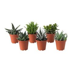 IKEA SUCCULENT Potted plant Assorted 9 cm