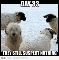 Stealth Dog