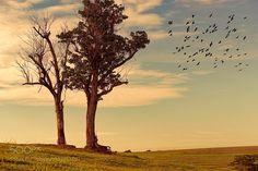 Somewhere by enzodavide #Landscapes #Landscapephotography #Nature #Travel #photography #pictureoftheday #photooftheday #photooftheweek #trending #trendingnow #picoftheday #picoftheweek