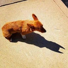 By day he is Bruce but by night