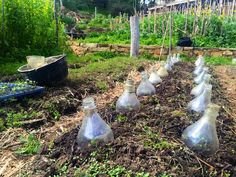Making DIY Glass Cloches for Early Spring Plants