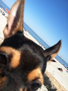Penny at the beach.